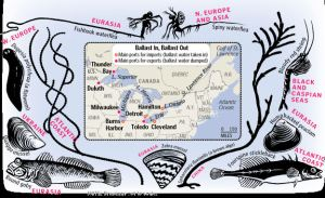 Non-indigenous species carried in ballast water (graphic by Patterson Clark of the WPost)